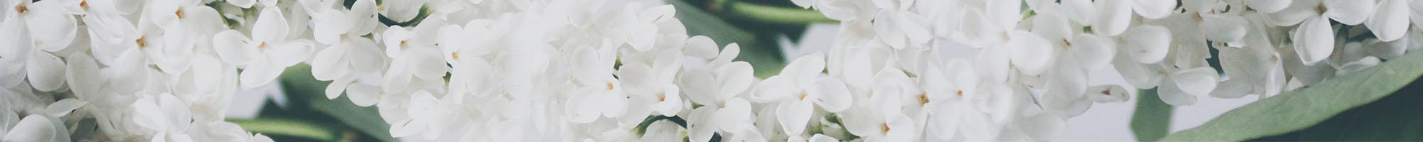 novosti-iz-svijeta-cvijeca