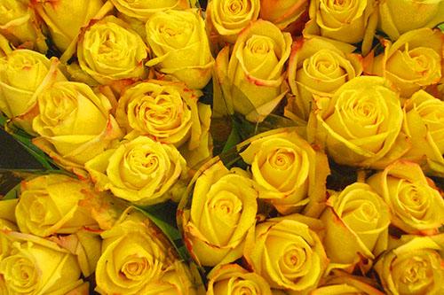 veleprodaja-cvijeca-hrvatska