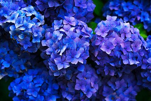 vita-flos-uvoz-veleprodaja-cvijeca