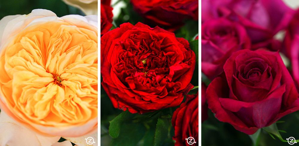 VITA-FLOS-ruze-cvijece-za-vjencanje