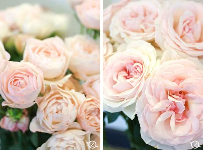 VITA-FLOS-ruze-cvijece