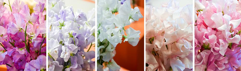 cvijece-nabava