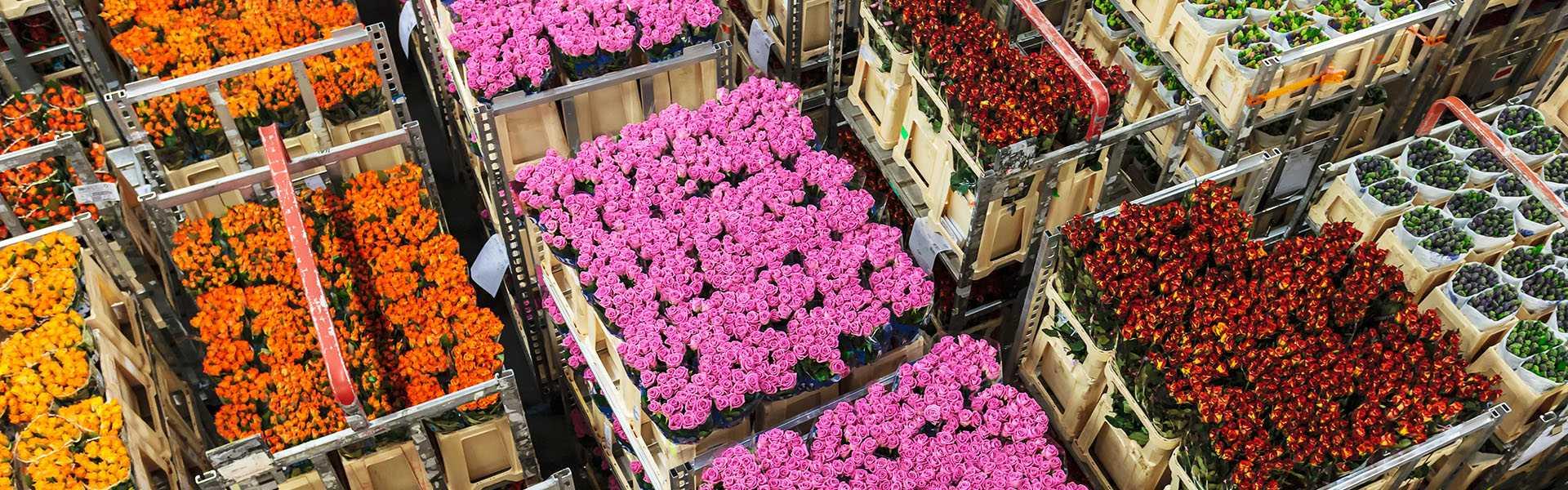 uvoz-i-veleprodaja-cvijeca-vita-flos