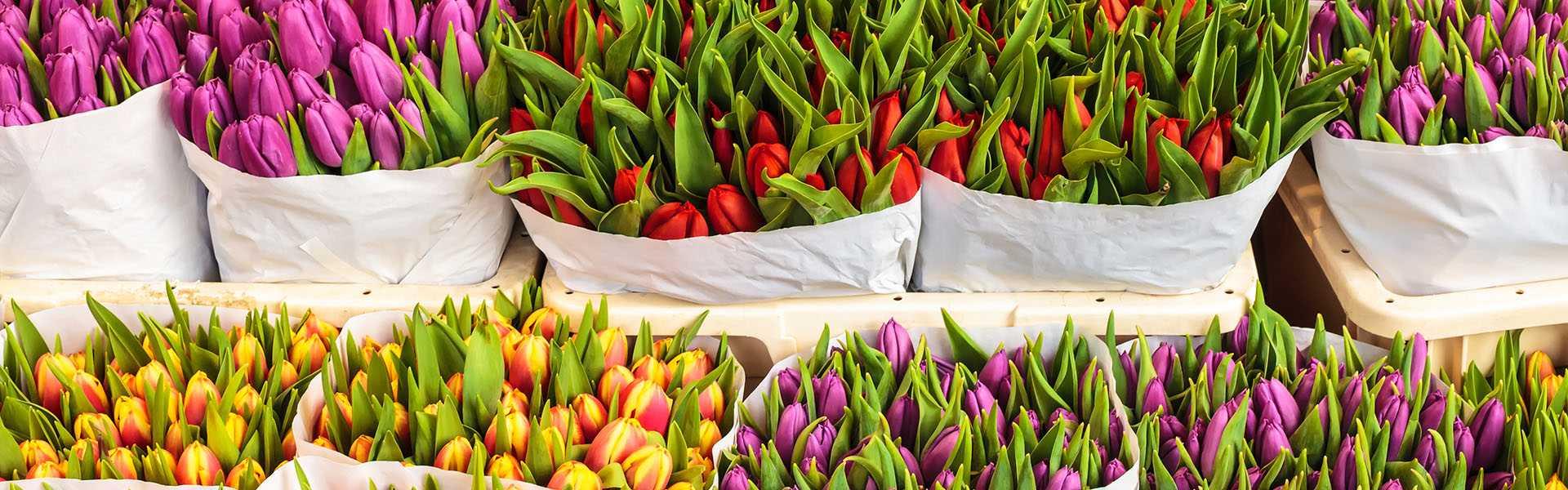 vita-flos-distribucija-cvijeca