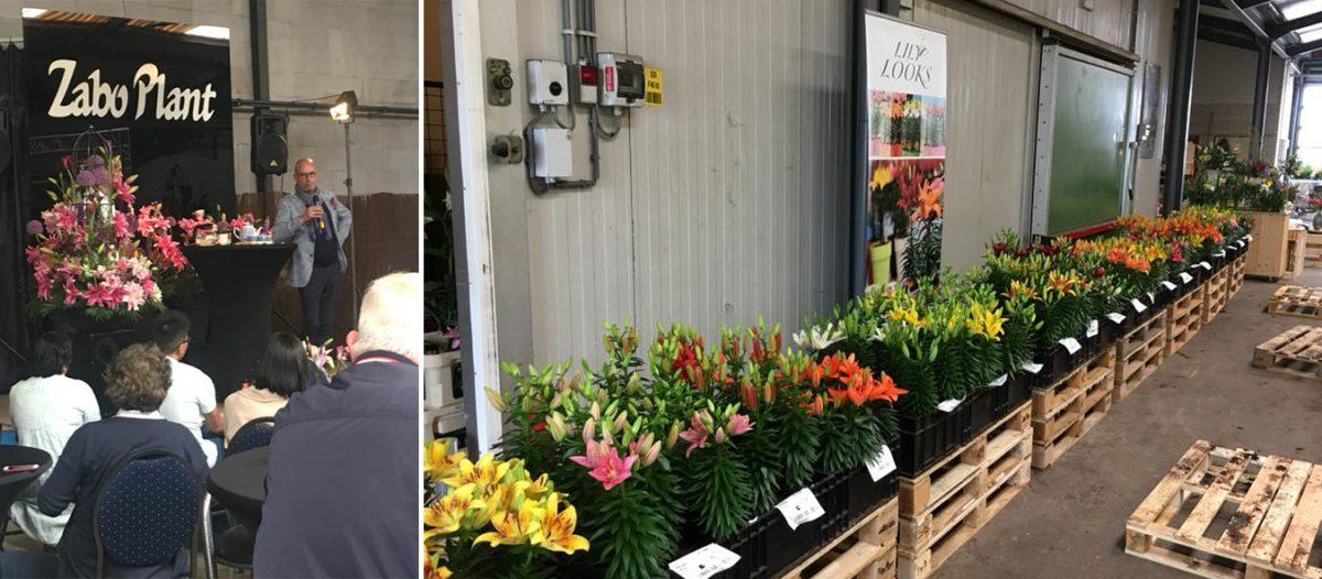 uvoz-cvijeca