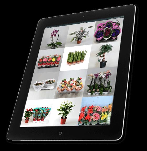 narucivanje-cvijeca-internet