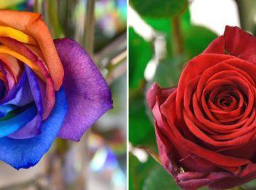veleprodaja-cvijeca