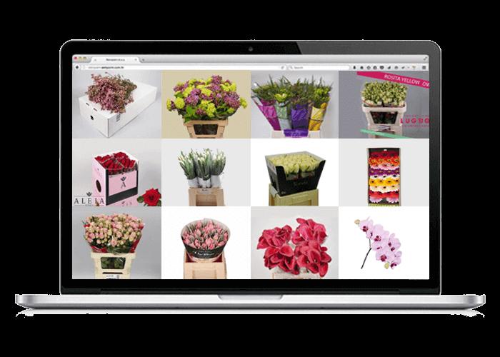 online-prodaja-cvijeca