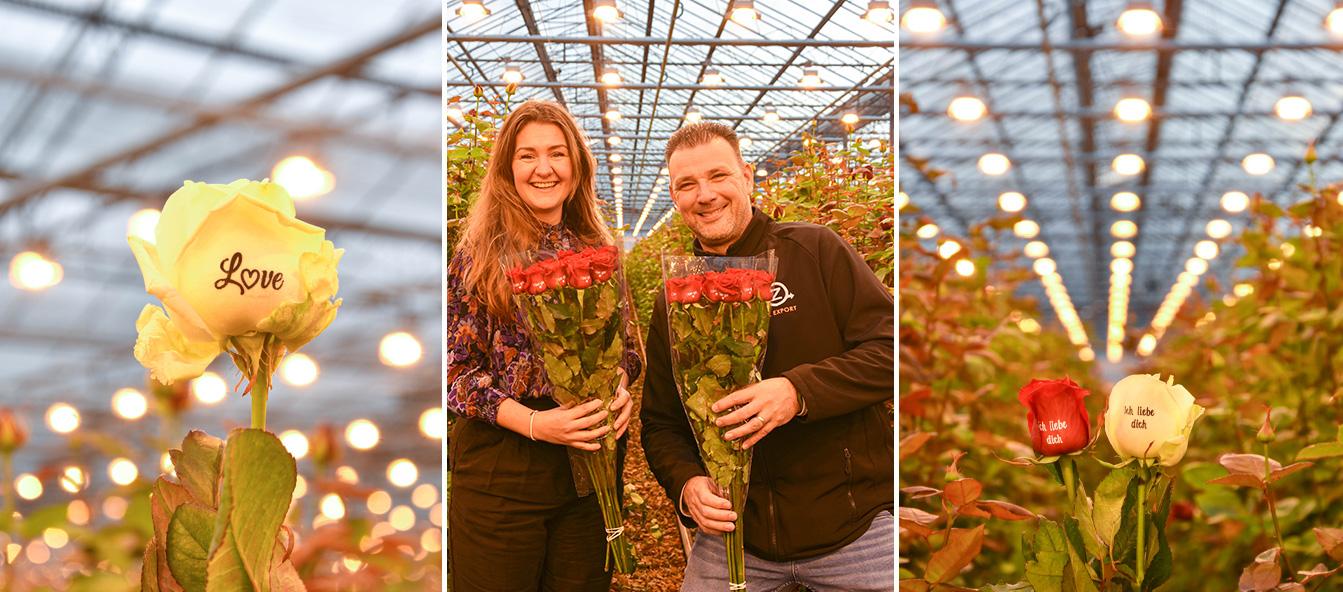 veleprodaja-cvijeća