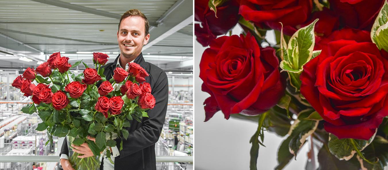 vita-flos-veleprodaja-cvijeca-valentinovo